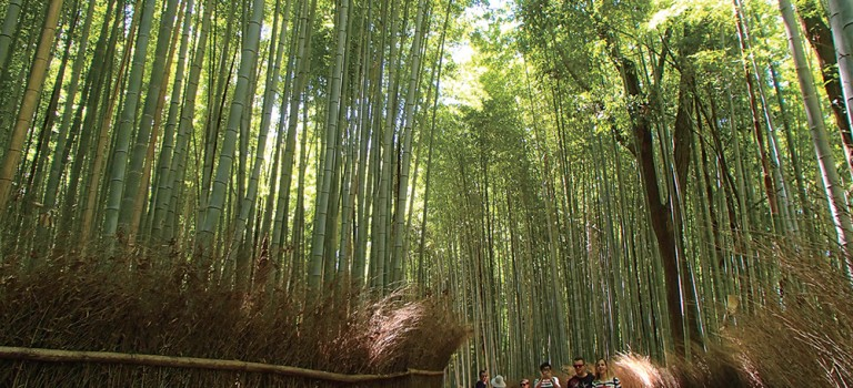 KYOTO – See All the Sights in Arashiyama