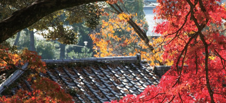 Nara – Shrines and temples, animals, and food