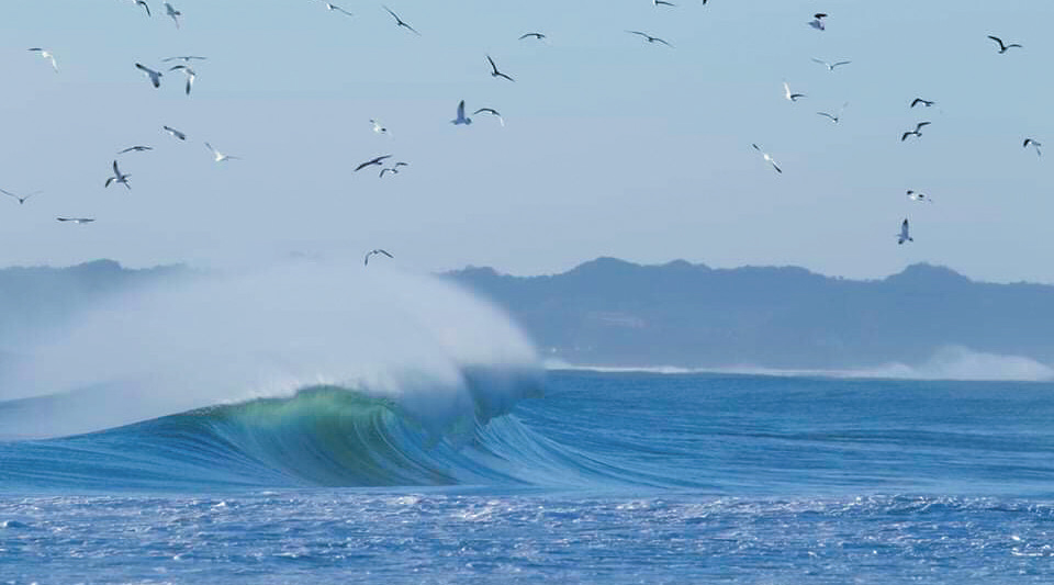 The Fukushima coastline boasts great surf, often with only the birds to admire (©Kiyomi Igari)
